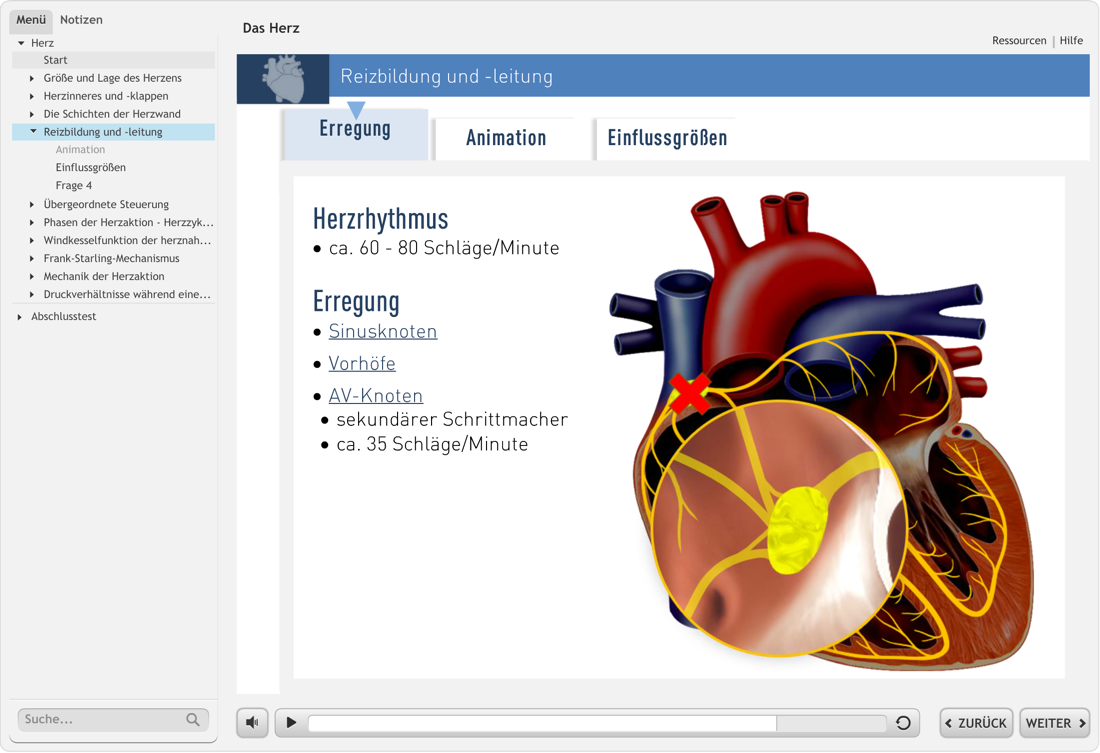 "Screenshot aus unserem Lernprogramm ""Herz"""